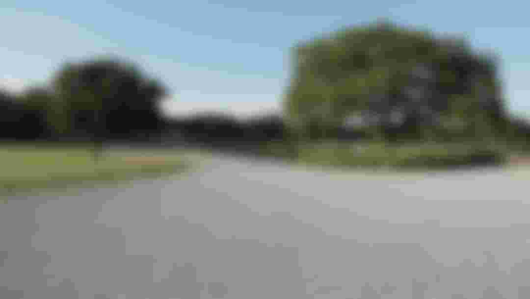 Trees frame both sides of a path in Musashinonomori Park.